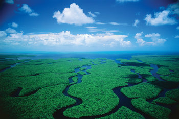 Florida Everglades near Naples Florida Vacation Homes.
