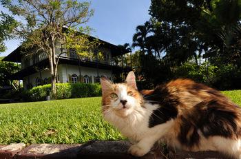 Hemingway House near La Concha Hotel & Spa.