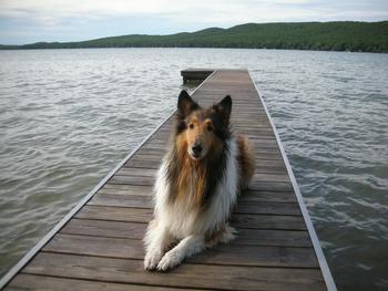 Pets welcome at Visit Up North Vacation Rentals.