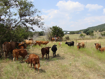 Pasture at Rancho Cortez