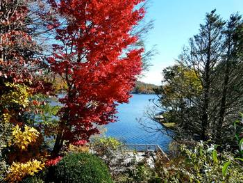Fall at The Greystone Inn.