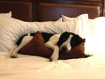 Bring your best friend to The Sebastian Vail.