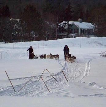 Dog sledding at Waterville Valley Resort.