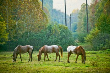 Horses at Panther Valley Ranch.