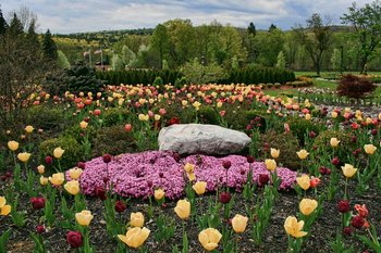 Tulip Festival at Honor's Haven Resort & Spa.