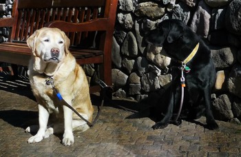 Pets welcome at Vail Mountain Lodge & Spa.