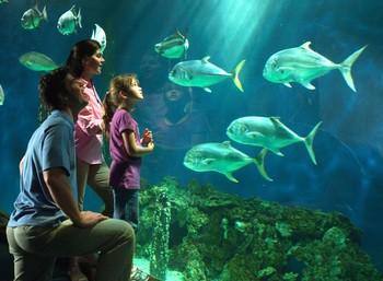 Aquarium near King's Creek Plantation.