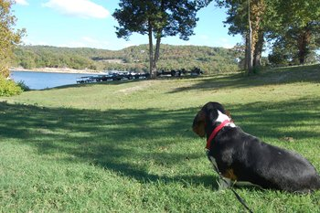 Pet Friendly at White Wing Resort on Table Rock Lake