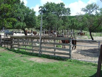 Horses at Silver Spur Ranch