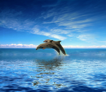 Dolphins jumping at Travel Resort Services, Inc.