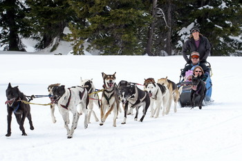 Dog Sledding at Mount Bachelor Village Resort.