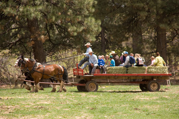 Majestic Dude Ranch Mancos Co Resort Reviews
