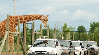 African Safari Wildlife Park near Maui Sands Resort & Indoor Waterpark.