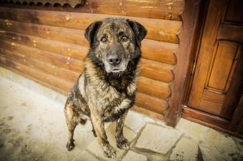 Pets welcome at Auntie Belham's Cabin Rentals.