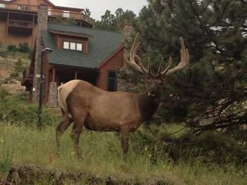 Wild life at River Stone Resort Properties.