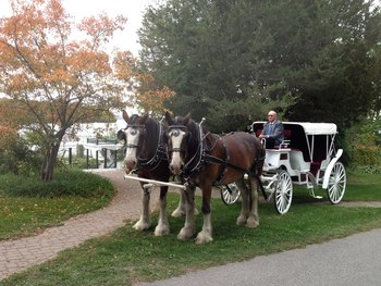 Horse carriage rides at Elmhirst's Resort.