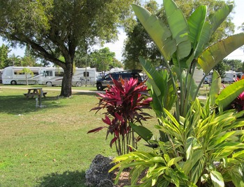 RV campsite at Miami Everglades.