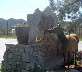 Wildlife by the sign at Rams Horn Village Resort.