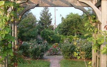 Garden view at Channel Bass Inn.