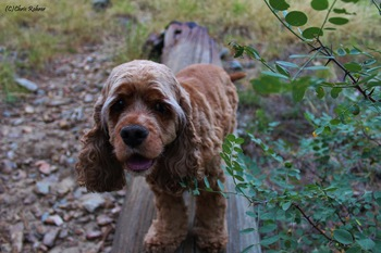 Pets welcome at SkyRun Vacation Rentals - Summit County, Colorado.