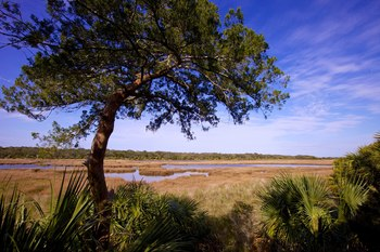 Scenery at Lodge on Little St. Simons Island.