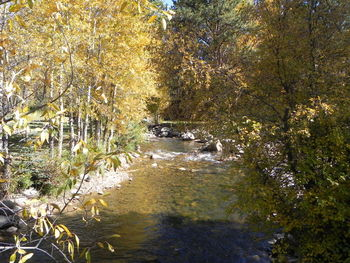 The river at Riverview Pines.
