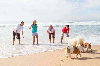 Pet friendly accommodations at Holiday Isle Properties.