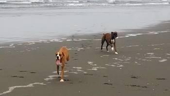 Pet friendly rentals at Redwood Coast Vacation Rentals.