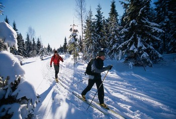 Cross country skiing near McGuire's Resort.