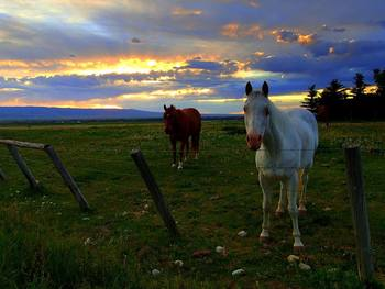 Horses at Grand Targhee Resort.