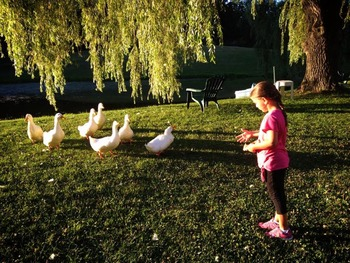 Feeding ducks at Baumann's Brookside Summer Resort.