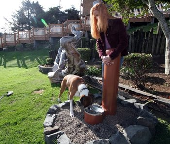 Pet Friendly at Hallmark Resort in Cannon Beach