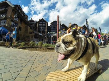 Pets welcome at Antlers At Vail.