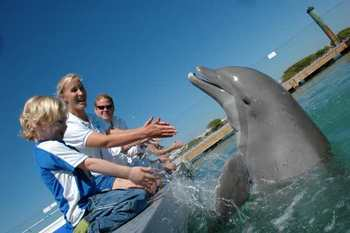 Dolphin Experience at Hawk's Cay Resort