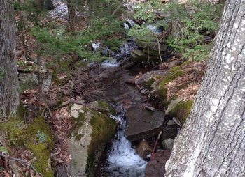 Creek near The Mountain Brook.