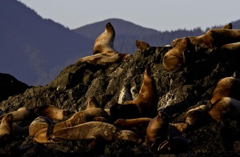 Seals at Long Beach Lodge Resort.