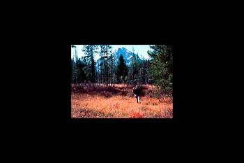 Hunting at Mountain Village Resort.