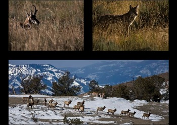Hunting at Trail Shop Restaurant and Inn.