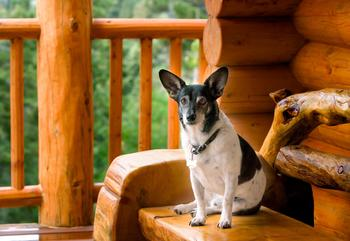 Pet friendly cabins at Greybeard Rentals.