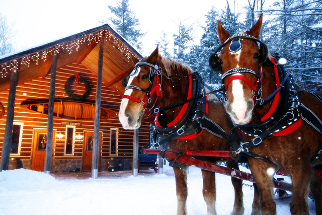 Thunder Bay's awarding-winning Elk Viewing Sleigh ride!
