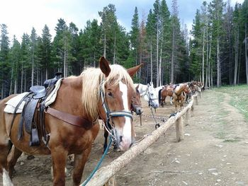 Horseback riding near Breckenridge Discount Lodging.