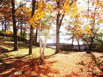 Fall at Christie Lake Cottages