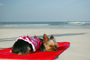 Pet friendly accommodations at Beacher's Lodge Oceanfront Suites.