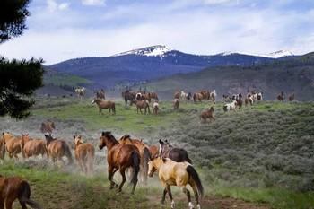 Horses at C Lazy U Ranch.
