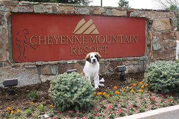 Cheyenne the resort dog at Cheyenne Mountain Resort.