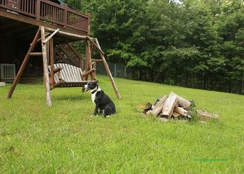 Pet friendly rentals at Enchanted Mountain Retreats, Inc.