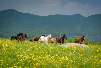 Horses at The Mountain Top Inn & Resort.
