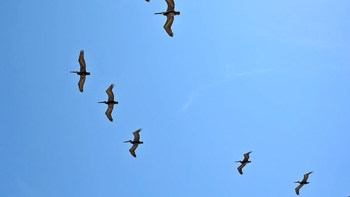 Birds flying above at Four Sails Resort.