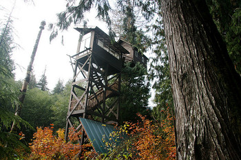 Exterior view of Cedar Creek Treehouse.
