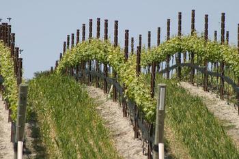 Winery near Paso Robles Inn